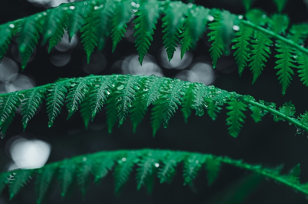 Water drop background on leaves in dark tone