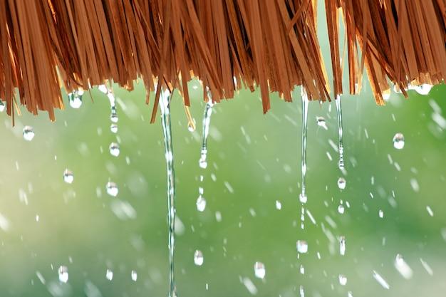 わらの屋根から落ちる水滴