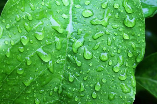緑の葉の水滴をクローズアップ