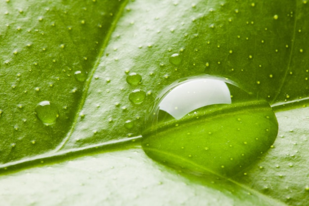 Капля воды на листе