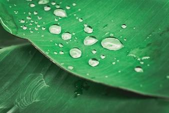Water drop on  tree leave.