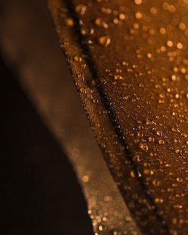 Water droplets on the brown feather surface against blurred backdrop