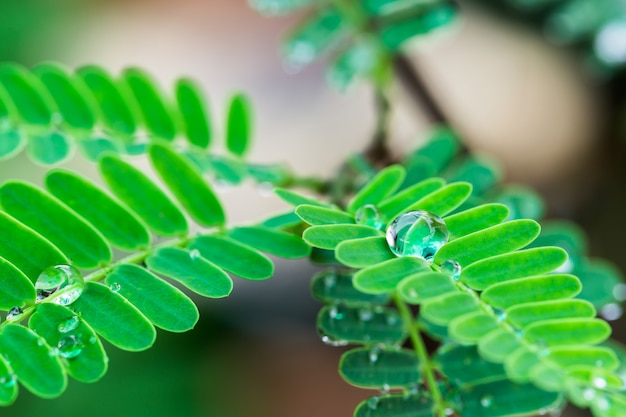 Water droplets from forming on the leaves