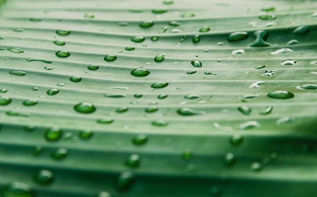 自然の緑の葉の上の水滴
