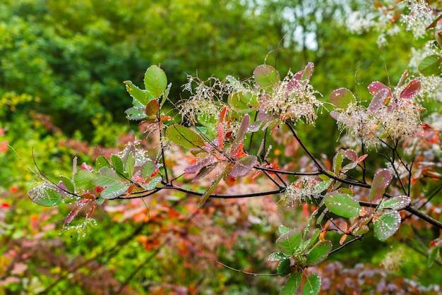 Капли воды на листьях деревьев