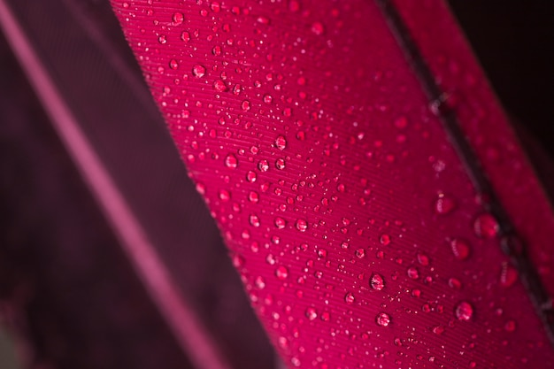 Water droplets on the pink feather surface