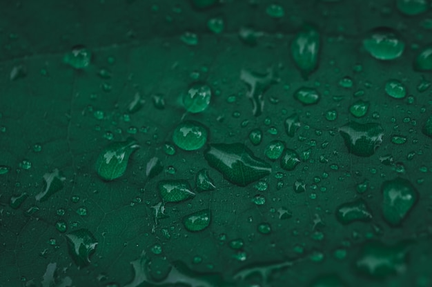 Water droplets show love the earth love environment