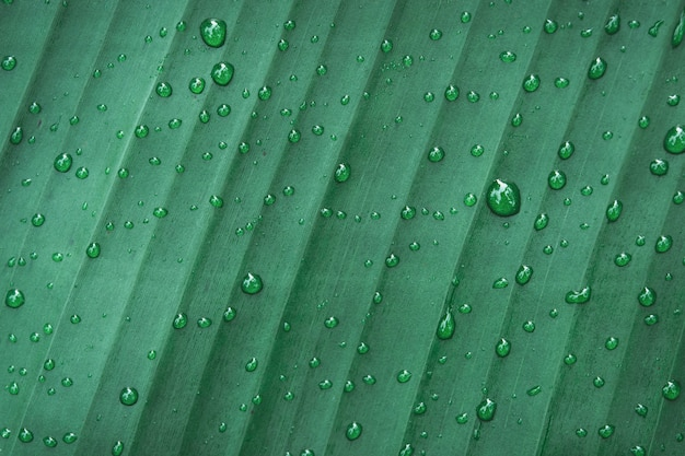 Water drops on banana leaf background