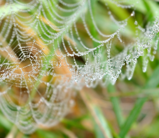 Water drops on a cobweb in grass