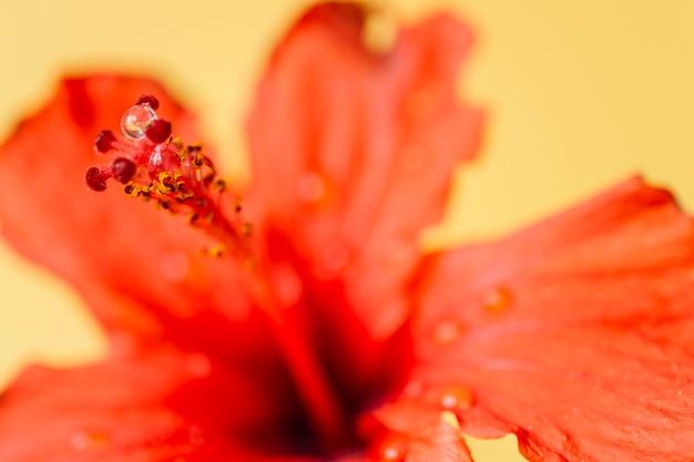 Gocce d'acqua sui pistilli di fiori
