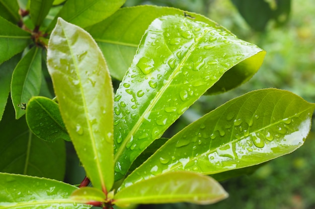Water drops on green leaf background