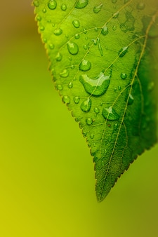 Water drops on a green leaf close up