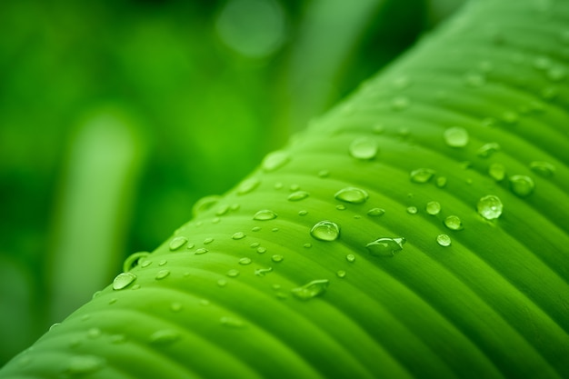 Water drops on leaf close up