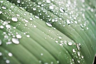雨の後、美しい葉に水が落ちる。バックグラウンド。