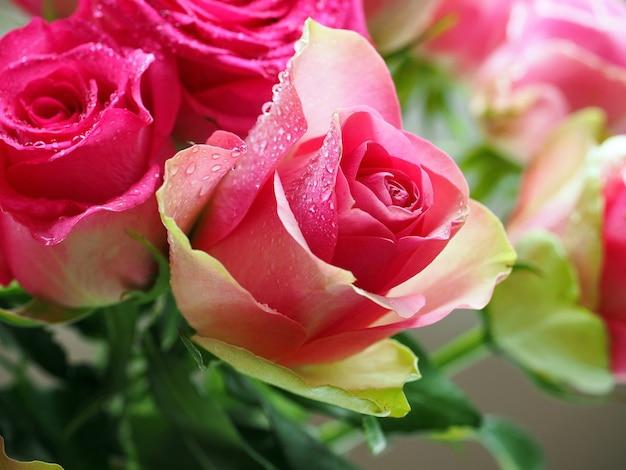 美しいピンクのバラに水滴