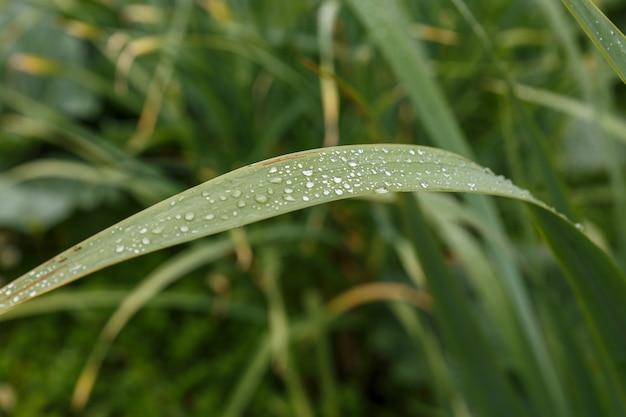 雨上がりの緑の芝生に水滴。
