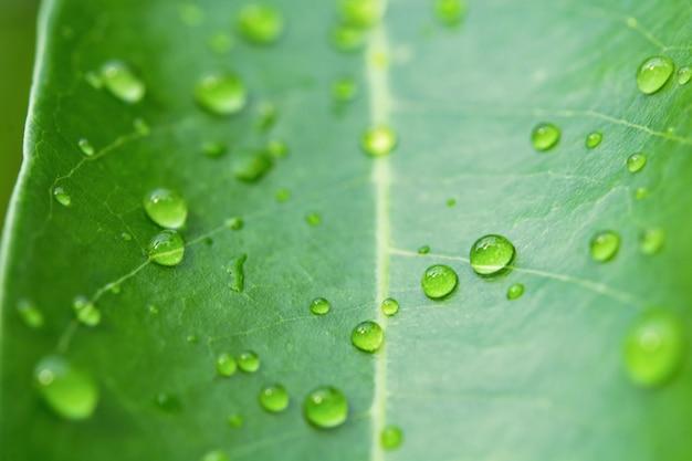 緑の葉に水滴