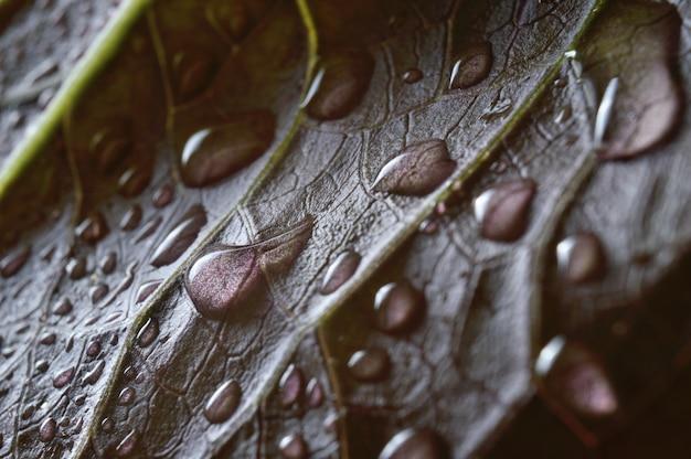 緑の葉に水滴。閉じる。