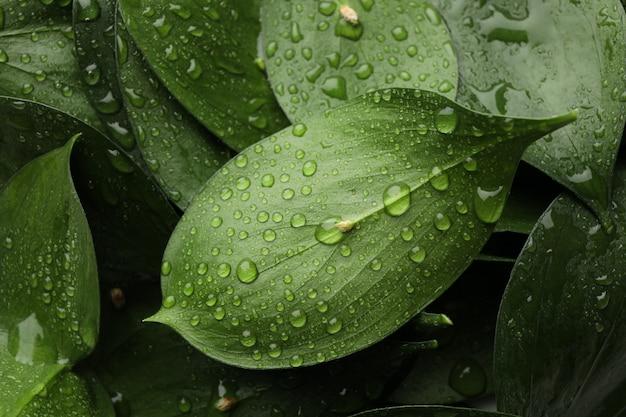 緑の葉に水滴、テクスチャ背景、クローズアップ