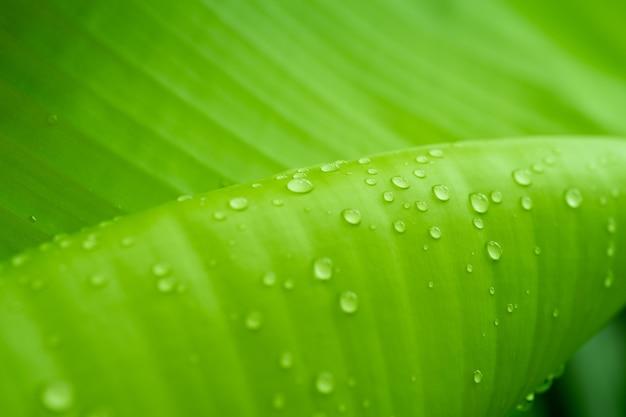 葉の水滴はクローズアップ
