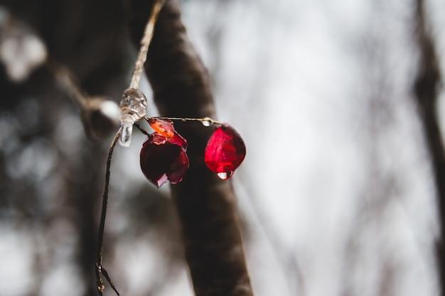작은 잎에 물 방울
