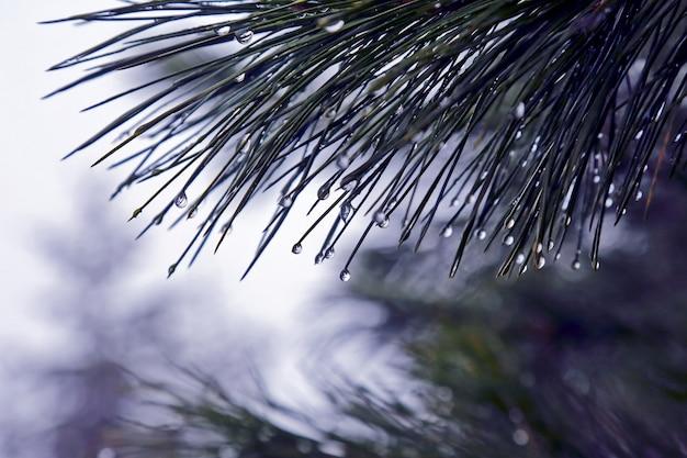 Капли воды на ветке дерева после дождя
