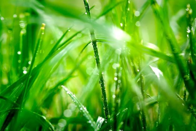 Капли воды на поверхности зеленой травы