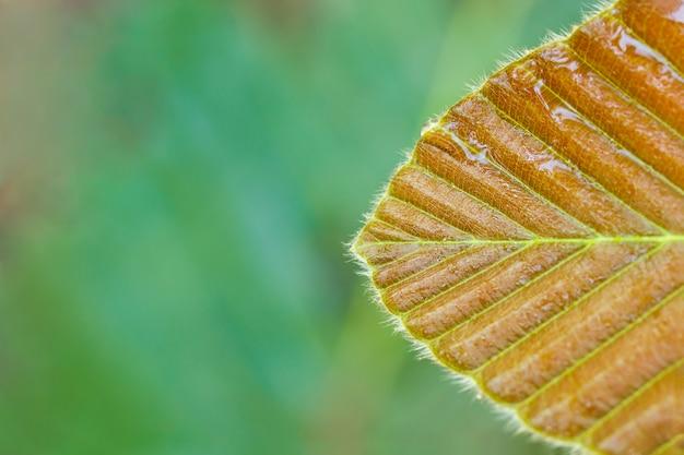 熱帯林の葉の上に水滴します。