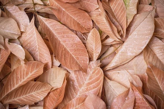 Water drops on orange leaf for background.