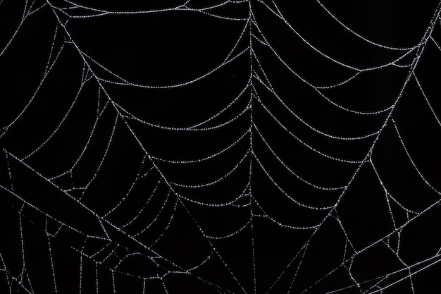 Water drops on the spider web.