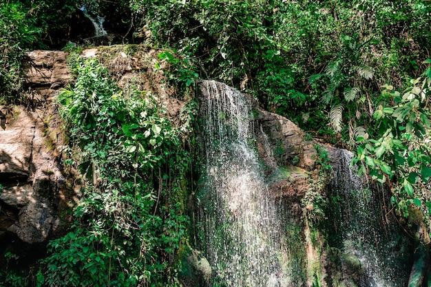 Вода падает с камней, образуя небольшой водопад в джунглях.