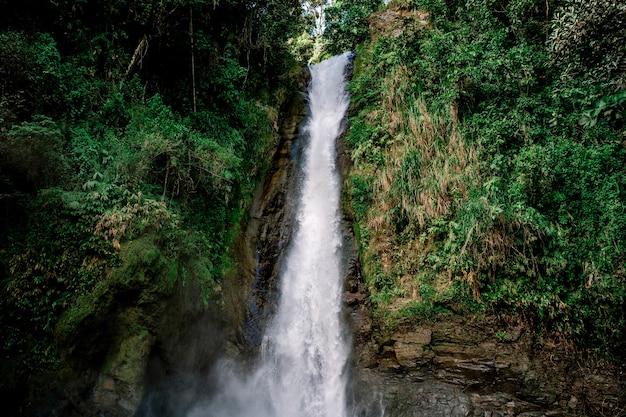 Вода падает с водопада в окружении растений. турриальба, коста-рика