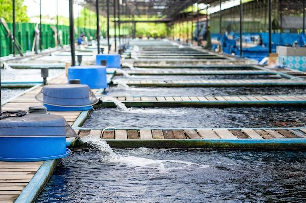 Система очистки воды из трубы водяной помпы на рыбоводной ферме.