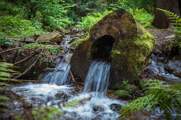 Вода из ручья в лесу течет через середину ствола дерева