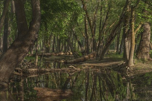 昼間は緑の葉に覆われた木々に囲まれた森の中の水