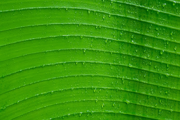 Water on leave background, green leaf, nature background