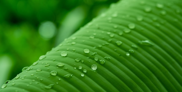 Water on leave background, green leaf nature
