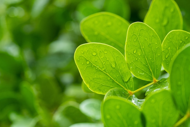 Water on leaves background