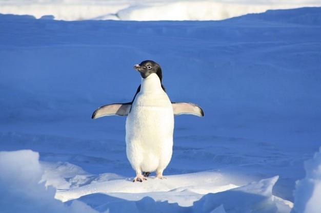 水ペンギンおかしい動物