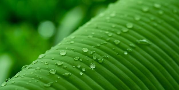 Вода на фоне листьев, зеленая природа листа