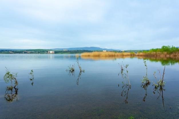 湖のほとりの水草