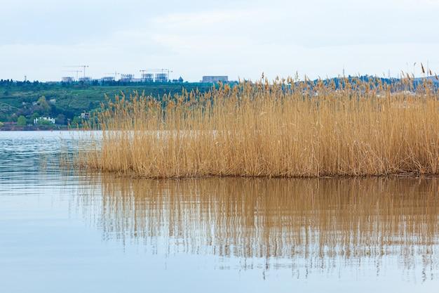 湖のほとりの水草 Premium写真