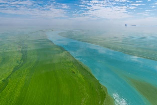 藍藻の開花による水質汚染は世界の環境問題です