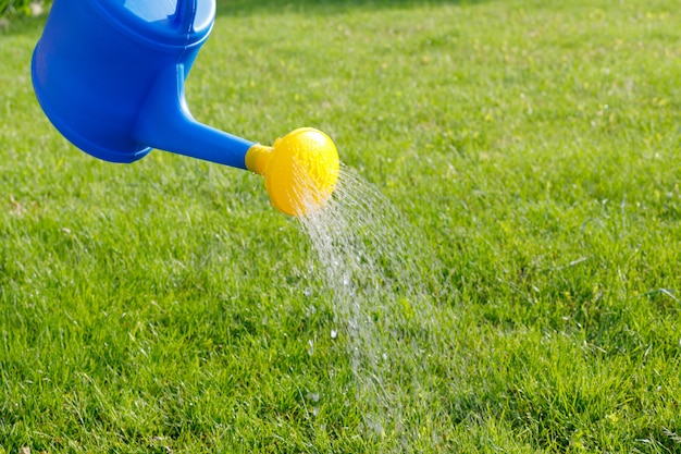 Water pours from a blue plastic watering can with a yellow diffuser onto a green lawn