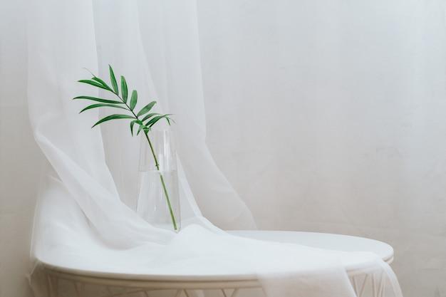 Водное размножение комнатных растений.