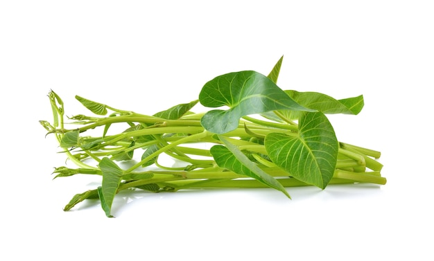 Water spinach, morning glory on white