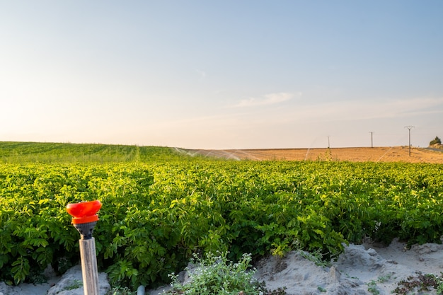 Water spray at sunset, agricultural irrigation watering system in the field, and shallow field depth