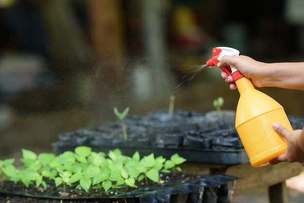Water spraying seedlings.