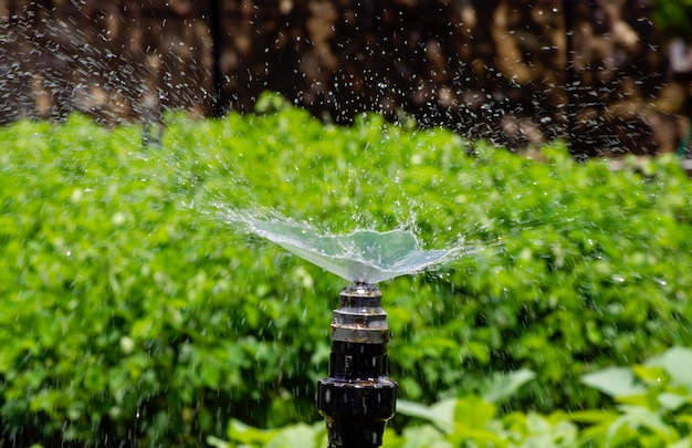 グヌンキドゥルジョグジャカルタの苗床プランテーションで水をまくための散水装置。