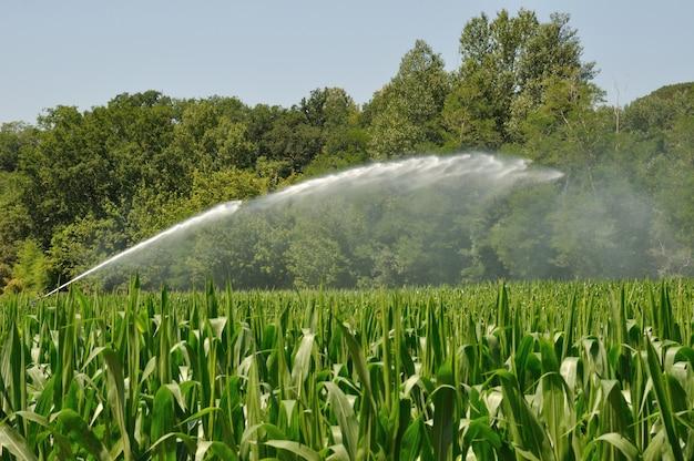 Water sprinkler installation in a field in france